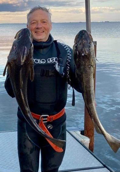 1.vragtorsk – Torsk fanget af frankgellert ved Øresund
