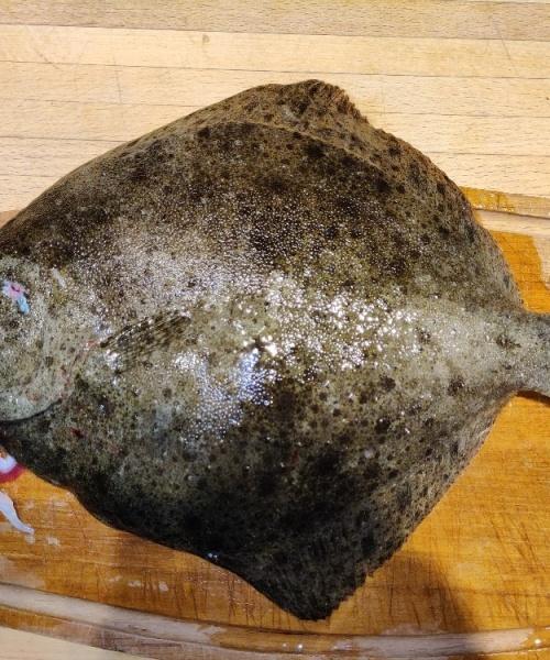 Pighvar fanget af SebastianTreulle ved Langeland